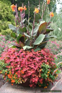 One planter, several deadheading challenges from Cannas, Coleus, Nasturtiums and Lantana.
