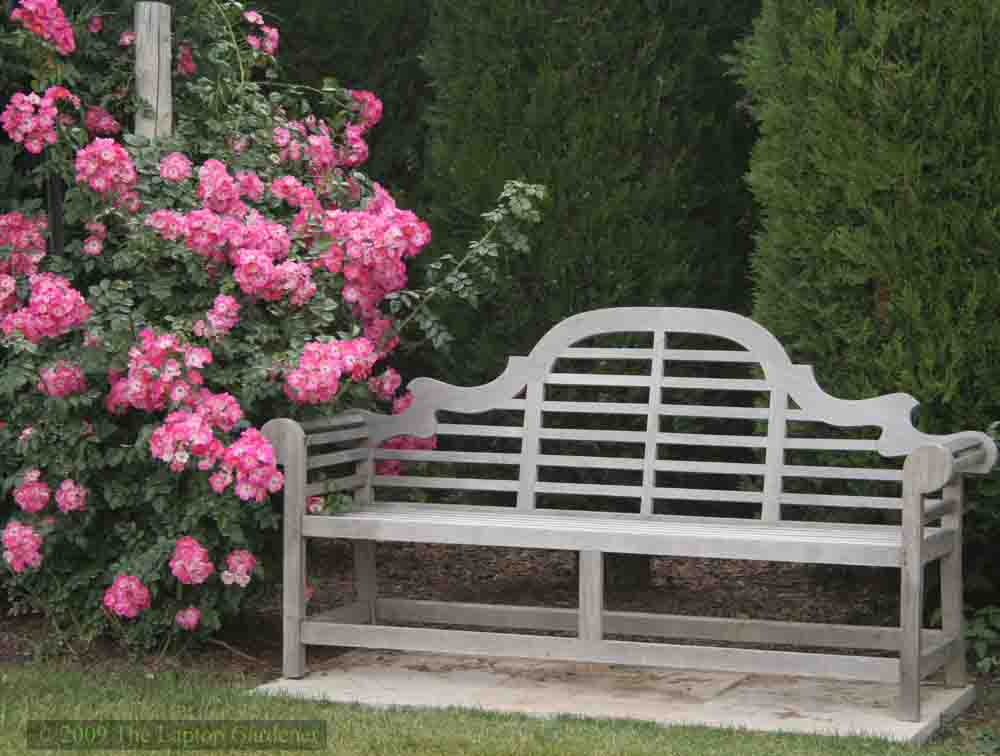 A favourite bench to enjoy the rose garden at the Niagara Parks Botanical Garden and School of Horticulture in Niagara Falls, Ontario, Canada.