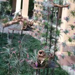 Bok Tower Gardens Tillandsia in the entrance garden