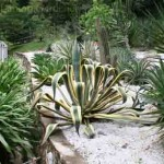 Cactus and succulent sollection in the Sun Rockery garden at the Penang Botanical Garden