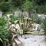 Cactus and succulent sollection in the Sun Rockery garden at the Penang Botanical Garden
