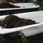 Composting in old bathtubs in Langkawi