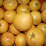 Grapefruits at Lang Sun Country Groves