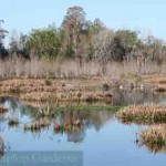 One of the many wildlife habitats at Polk's Nature Discovery Center at Circle B Bar Reserve