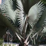 Silver Palm in KL
