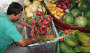 Selling Dragon Fruit at the Tropical Fruit Farm in Teluk Bahang