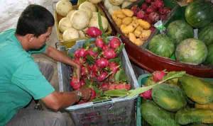 Selling Dragon Fruit at the Tropical Fruit Farm in Teluk Bahang
