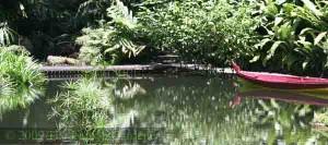The Water Garden at the Tropical Spice Garden