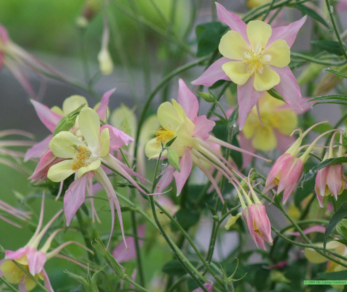 Perennials for Attracting Wildlife The Laptop Gardener