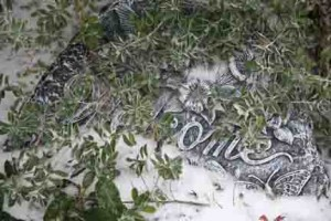 Early winter snows can damage plants that aren't ready for the sudden chill