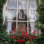 An Amsterdam window box