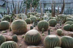 Barrel cactus in the arid greenhouse at Queen Sirikit Botanic Garden